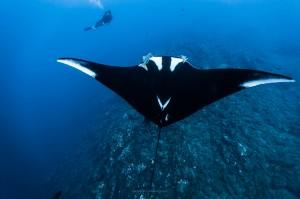 BUCEO EN BAJA CALIFORNIA:  10 DIAS EN SOCORRO ISLANDS